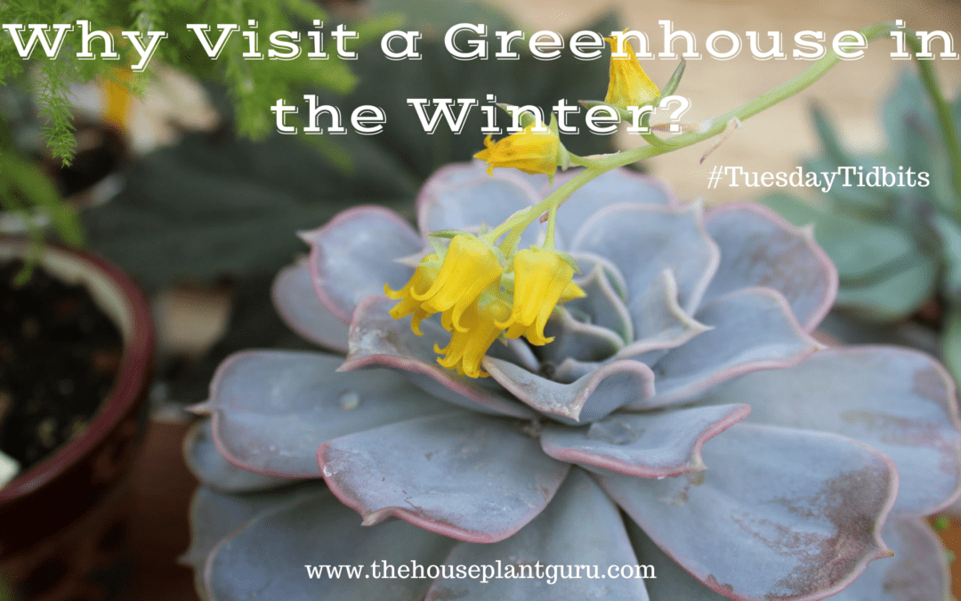 Why Visit a Greenhouse in the Winter?