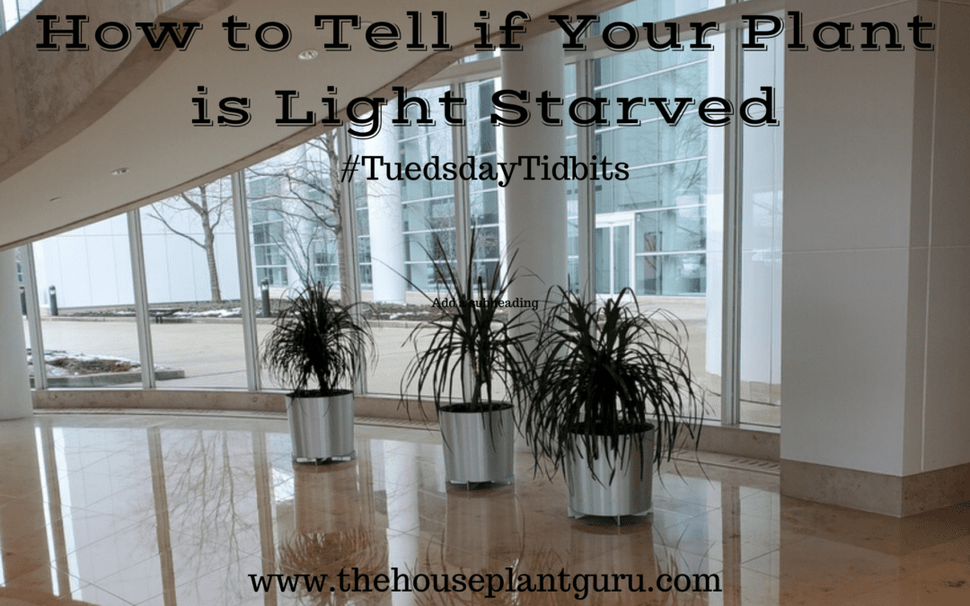 How to Tell if Your Plant is Light Starved