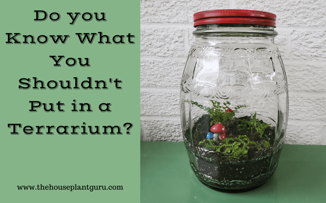 Do You Know What You Shouldn't Put in a Terrarium?