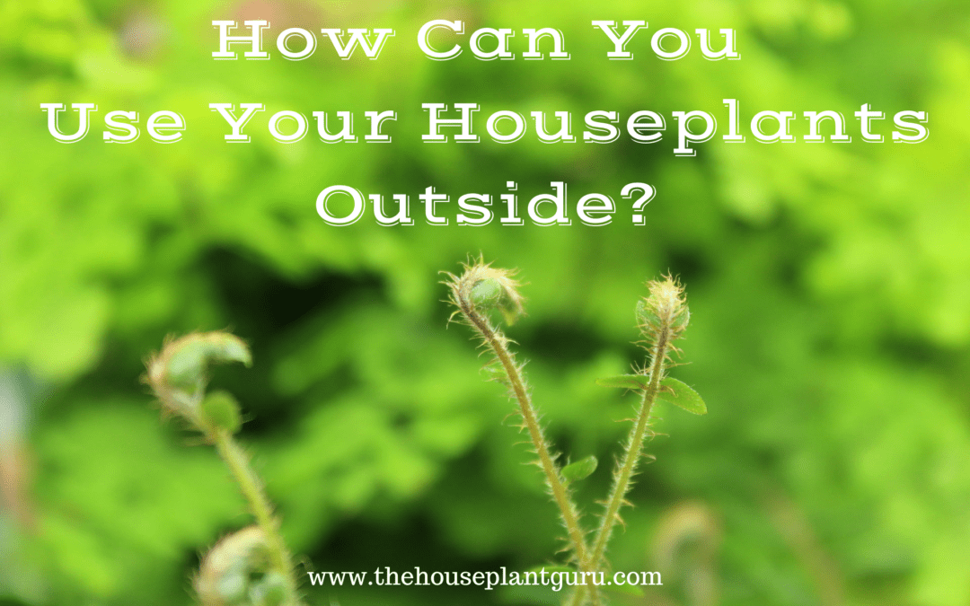 How Can You Use Your Houseplants Outside?