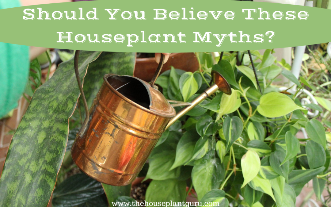 Should You Believe These Houseplant Myths?