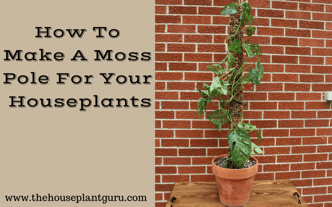 How To Make A Moss Pole For Your Houseplants
