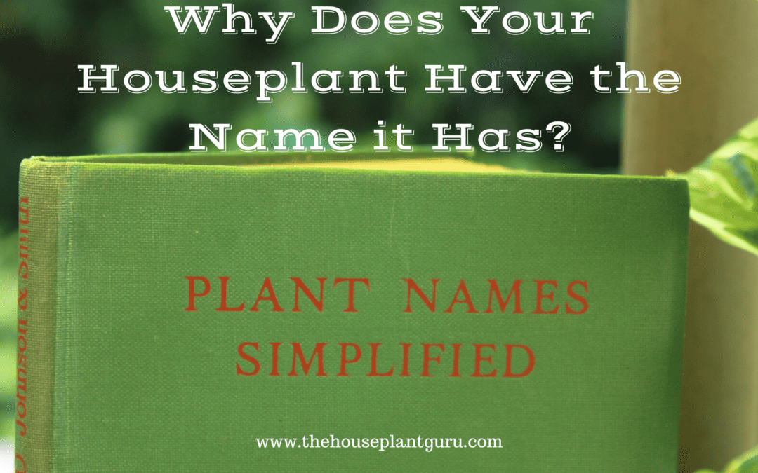 Why Does Your Houseplant Have the Name it Has?