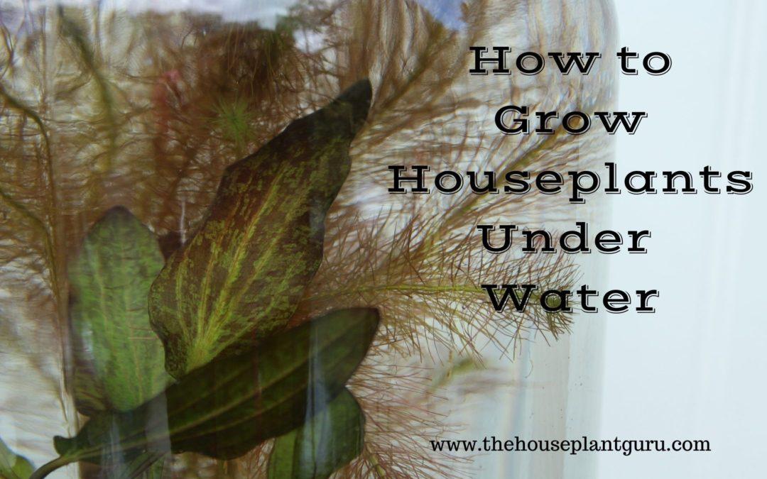 How to Grow Houseplants Under Water