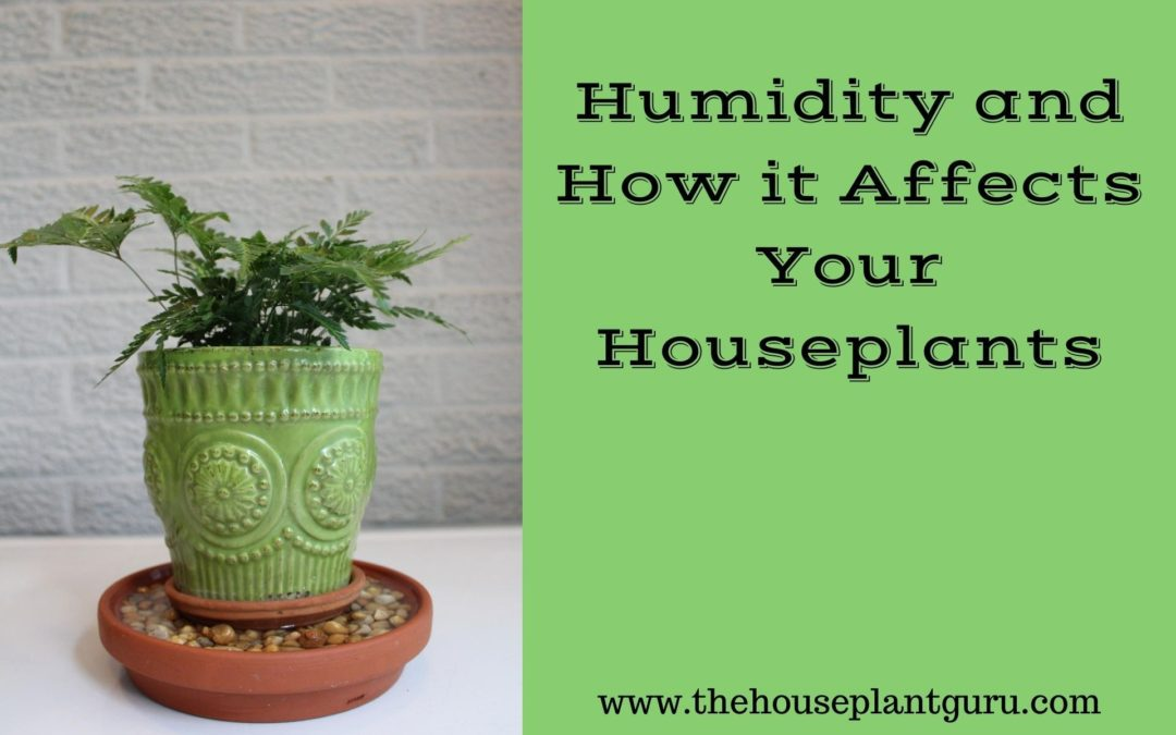 Humidity and How it Affects Your Houseplants