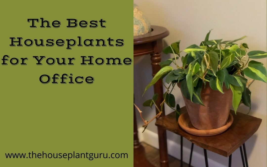 The Best Houseplants for Your Home Office