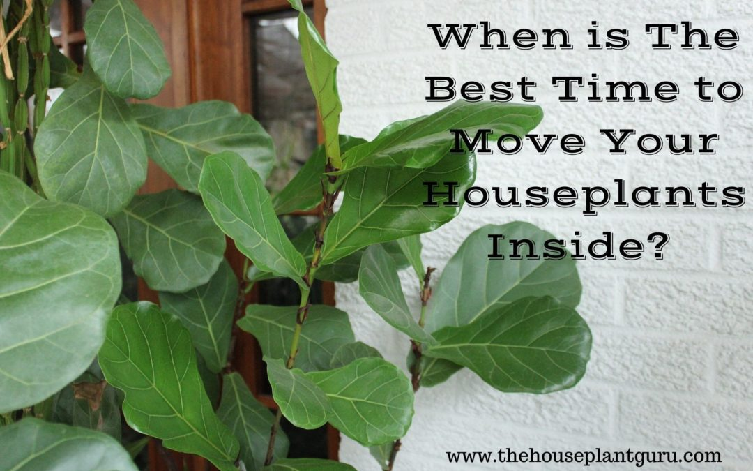 When is The Best Time to Move Your Houseplants Inside?