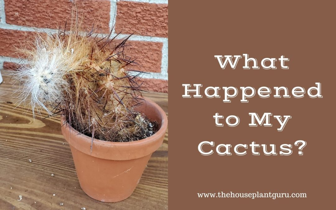 What Happened to My Cactus?