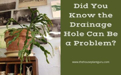 Did You Know the Drainage Hole Can Be a Problem?