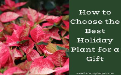 How to Choose the Best Holiday Plant for a Gift