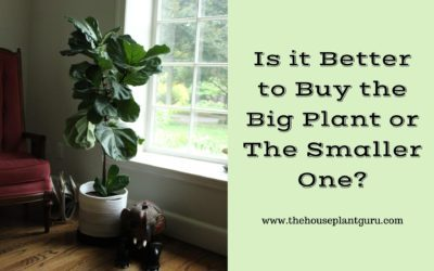 Is it Better to Buy the Big Plant or The Smaller One?