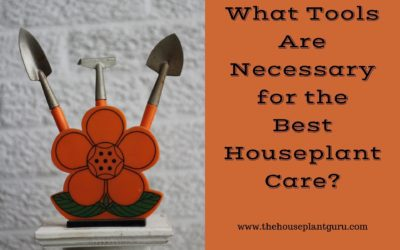 What Tools Are Necessary for the Best Houseplant Care?