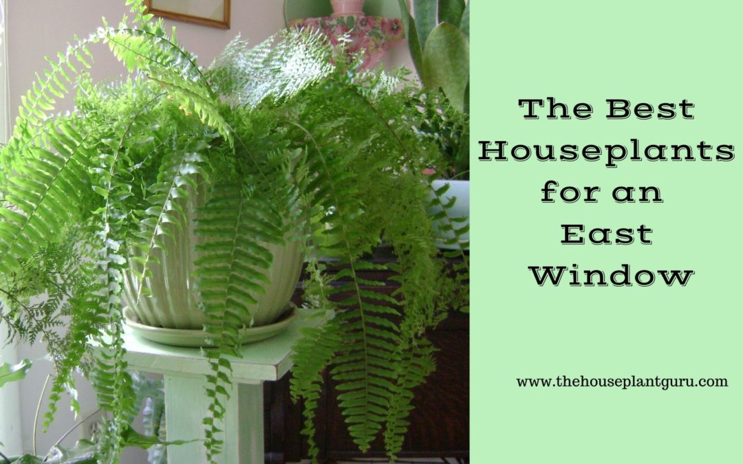 The Best Houseplants for an East Window
