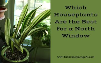 Which Houseplants Are the Best for a North Window