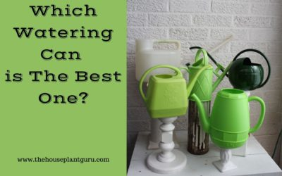 Which Watering Can is The Best One?
