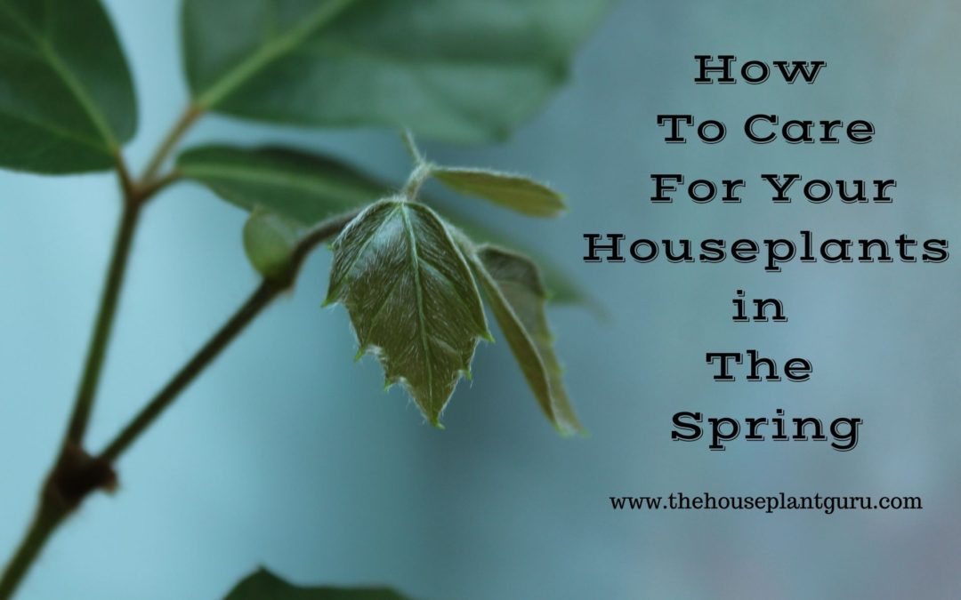 How To Care For Your Houseplants in The Spring