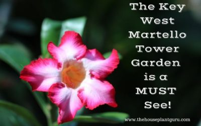 The Key West Martello Tower Garden is a MUST See!