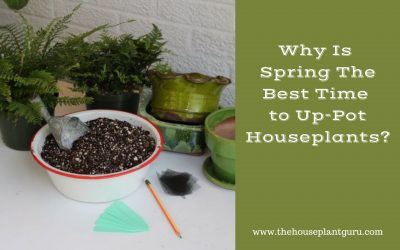 Why Is Spring The Best Time to Up-Pot Houseplants?