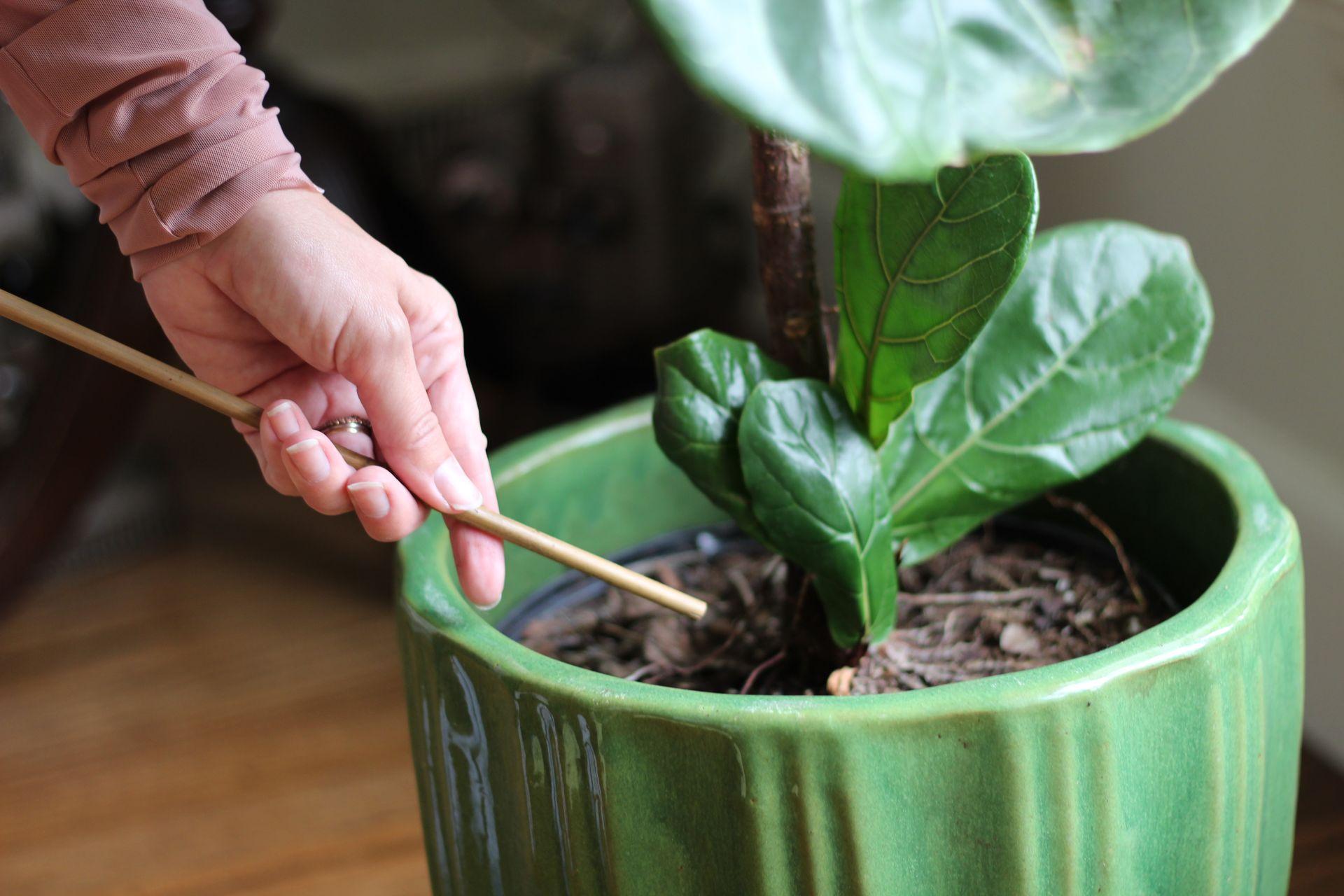 houseplant watering