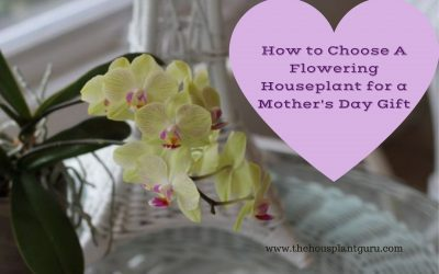How to Choose A Flowering Houseplant for a Mother's Day Gift
