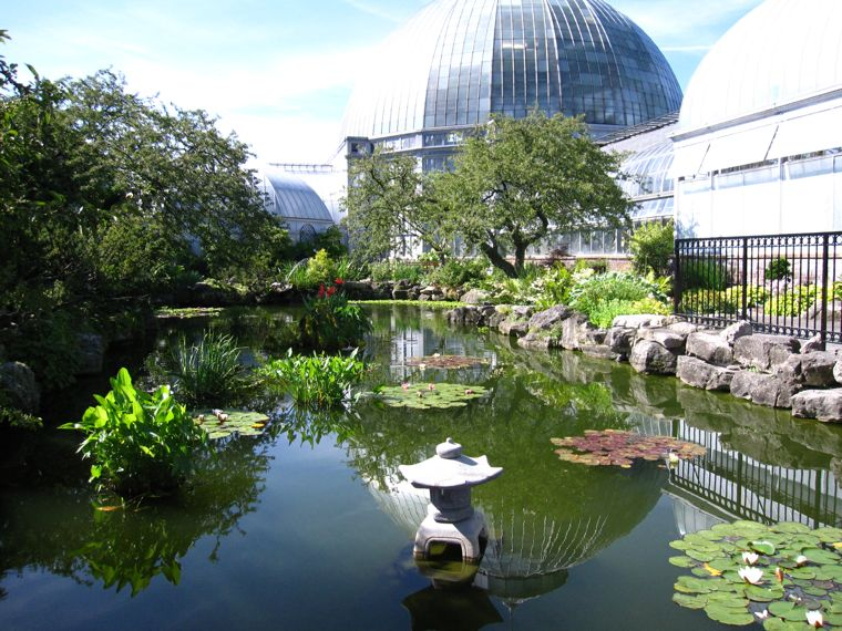 Lily Pond at Belle Isle