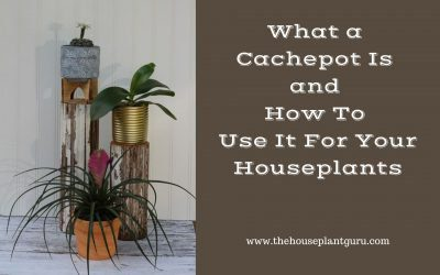 What a Cachepot Is and How To Use it For Your Houseplants