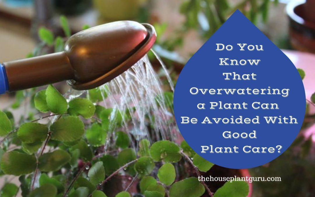 Do You Know That Overwatering a Plant Can Be Avoided With Good Plant Care?