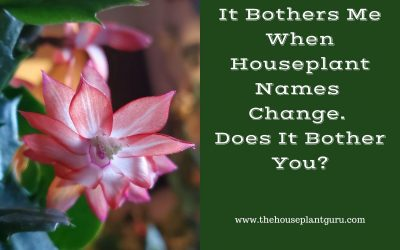 It Bothers Me When Houseplant Names Change. Does It Bother You?