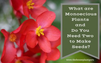 What are Monoecious Plants and Do You Need Two to Make Seeds?