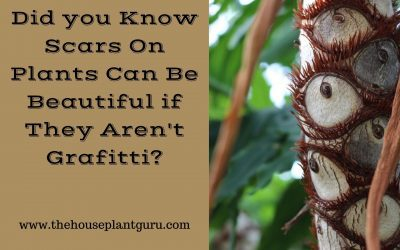 Did you Know Scars On Plants Can Be Beautiful if They Aren't Grafitti?
